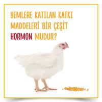 Yemlere Katılan Katkı Maddeleri Bir Çeşit Hormon Mudur?